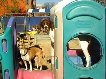 Dogma Dog Daycare DC/VA/MD
